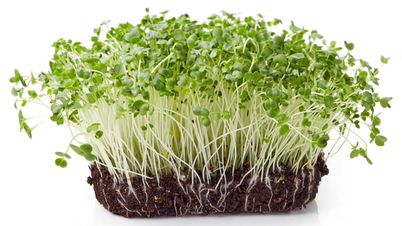 Broc Sprouts