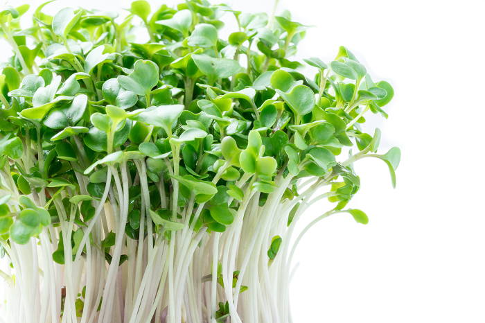 Broc Sprouts Close-up